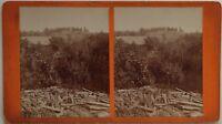 Paesaggio Legno Foto Stereo 10x17,8 CM Vintage Albumina c1890