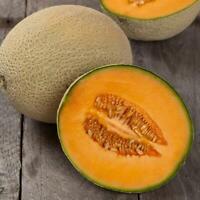 100 Hales Best Jumbo Cantaloupe Seeds | NON-GMO | USA Seller