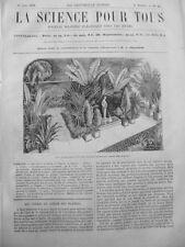 1860 SPT6 VUE INTERIEURE GRANDE SERRE JARDIN PLANTES PARIS