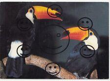 602 Q   AK  Ansichtskarte  Zoologischer Garten Basel  Riesentukane Vögel