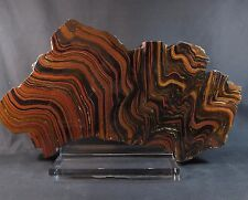 Beautiful West Australian Tiger Iron polished slab show piece