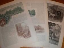 Article Lord Rosslyn's Stud Farm Burghley Paddocks 1892