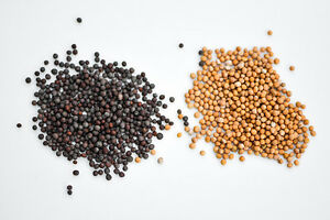 100g Whole Mustard Seeds - Yellow, Black or Brown - Premium Quality