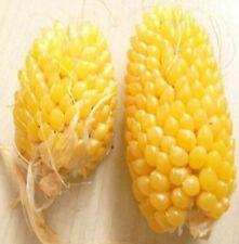 Pineapple Corn Seeds Heirloom Vegetable Seed Popcorn Organic Non-GM 10PCs