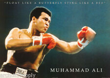 POSTER:BOXING : MUHAMMAD ALI - FLOAT LIKE A BUTTERFLY -FREE SHIP  #PG4018 LC22 K
