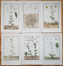 Garsault: Botanical Engravings Lot of 6 Prints Botany (H) - 1767