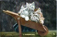 1910 Raphael Tuck Animal Life Kittens Cats in Wheelbarrow 4410 Postcard CN