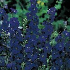 Delphinium / Larkspur- Blue Spire - 50 Seeds