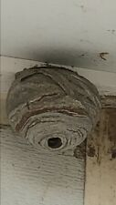 Wasp Nest Hornet Bees Hive Decor Science Taxidermy Insect