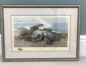 """David Shepherd Signed Limited Edition Print """"Elephant Seals"""" In Mint Condition"""