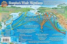 Humpback Whale Migrations Pacific Ocean Illustrated Card