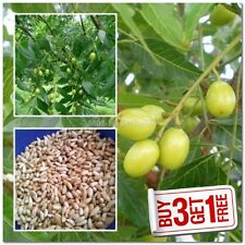 [ODJ-COT] Neem Seed Kernel Lot of 130 Seeds (10grams Aprx) Na {BUY 3 GET 1 FREE}