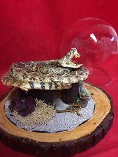 SALE#1*TAXIDERMY BABY RATTLESNAKE GLASS dsply DOME/SCORPION! snake-southwestern