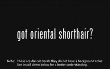 (2x) got oriental shorthair? Sticker Die Cut Decal