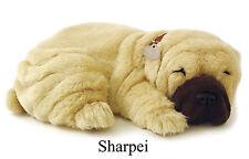 SHARPEI- Il cucciolo che respira - PERFECT PETZZZ