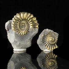 """2.5"""" Spiraling Golden FOSSIL PYRITIZED AMMONITE BothHalves Rare Germany for sale"""