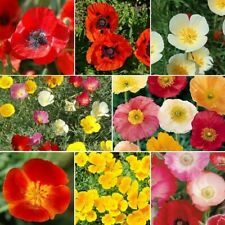 1,000 Poppy Power - Poppy Flower Seed Mix 8 Species of Wildflower Seeds Usa-Sell