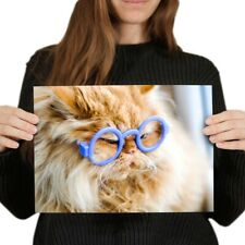 A4 - Funny Ginger Cat Glasses Poster 29.7X21cm280gsm #3844