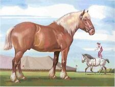 1962 BELGIAN DRAFT Horse Colored Print - Sam Savitt- Free Shipping