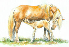 HAFLINGER & FOAL Original Watercolor on Ink Print Matted 11x14 Ready to Frame