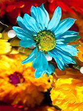 PRINT PHOTO MACRO NATURE PLANT FLOWER YEN COLOURFUL PETALS BLUE GREEN LFMP0117