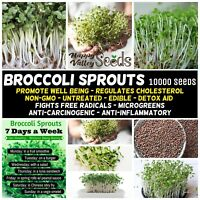 BROCCOLI SPROUTS 10000+ Seeds NON-GMO untreated PREVENT CANCER sprout sprouting