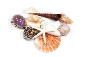 SEASHELLS, A SET OF 10  BEAUTIFUL PACIFIC SEASHELLS WITH FREE STARFISH