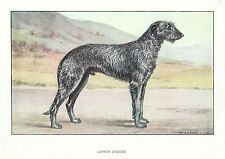 Rare 1930s Art Watercolor Dog Print France Francois Castellan SCOTTISH DEERHOUND