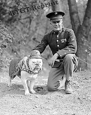 Photograph of USMC Bulldog Mascot Sgt. Jiggs -  Marine Corps Year 1925  8x10