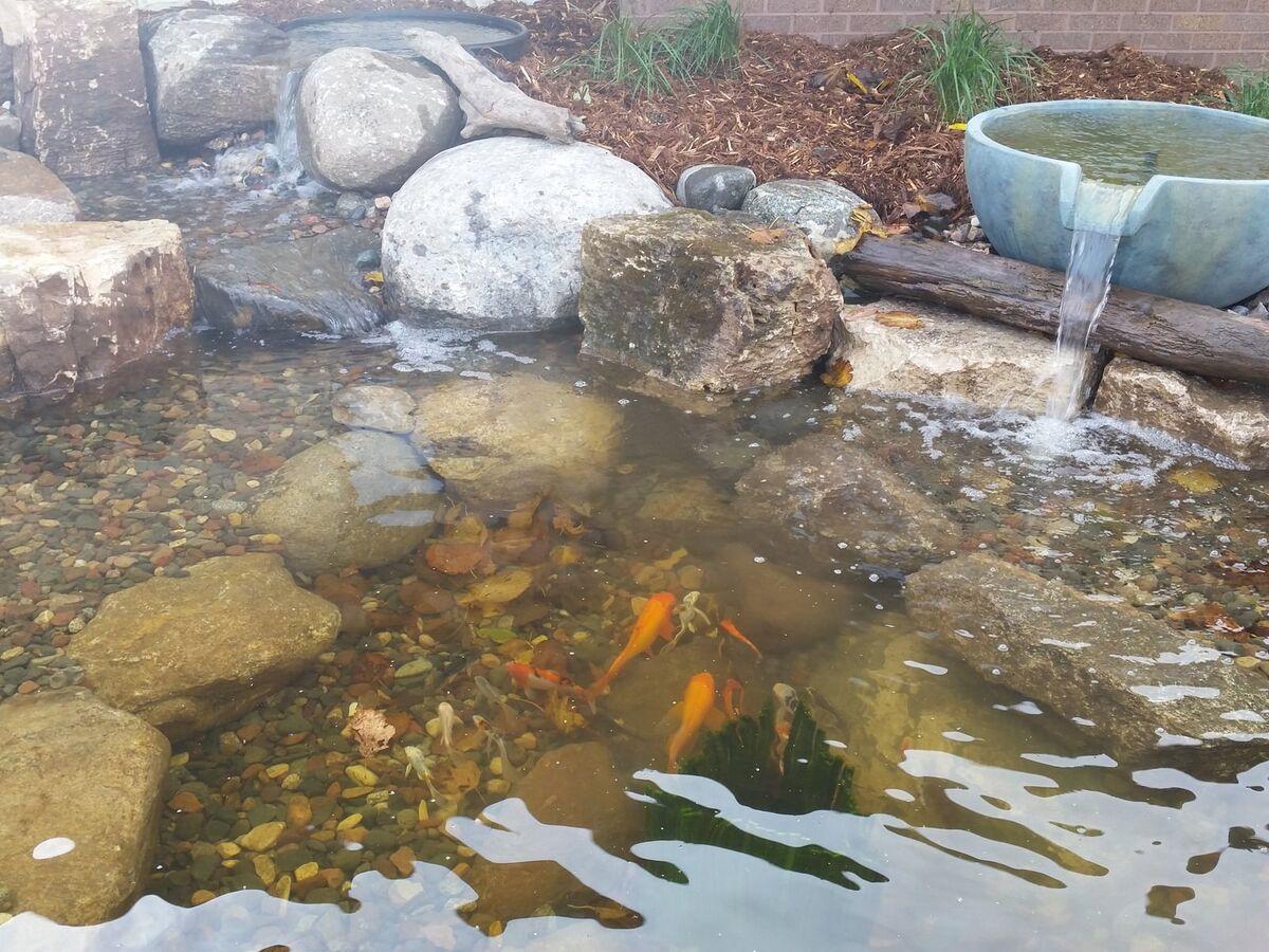 The Pond Company