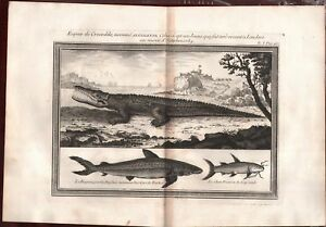 1739 Espece de Crocodile Alligator Engraving Print Copperplate French Rare