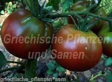 🔥 🍅 Black Brandywine  Tomate schwarz  Tomaten 10 frische Samen Balkon Kübel