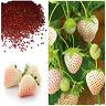 White Alpine Strawberry Fragaria Vesca Pineberry, Sweet Pinapple Flavour Seeds