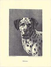 1890 Jean Bungartz Dog Art Head Study Print Reproduction DALMATIAN