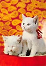 Domestic tabby White Cats, kitten, red ribbon