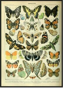 Vintage Butterfly Botanical Illustration Print Poster Wall art Home Room Decor