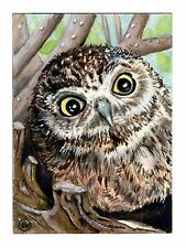 "ACEO ORIGINAL ""O, Huge World"" baby owl in nest painting by Colette van der Wal"