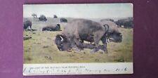 Vintage Canadian souvenir postcard last of the Buffalo winnipeg 1905