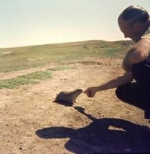 Ag28 vintage Slide Photo Amazing Naturalist Hand Feeding Prairie Dog in the Wild