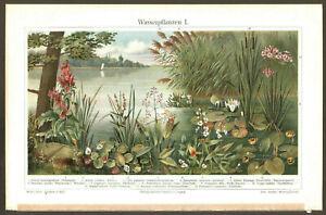1905. BOTANY. AQUATIC PLANTS & FLOWERS. I. Antique chromolithograph