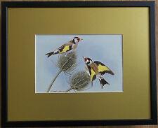 Basil Ede, 20''x16'' frame, Bird framed wall art, Gold Finch print, garden bird