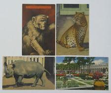 4 Ringling Bros Postcards Animal Winter Quarters Leopard Rhino Sarasota Museum
