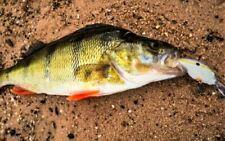 2 Bream Lures Bass Yellowbelly Flathead Barra Redfin Perch Jacks Trout Cod Shad