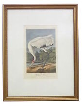 Audubon Whooping Crane No. 63 Pl. 313 Birds Of America Framed Print Hand Colored