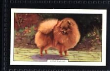 Gallaher Dogs 2nd Series 1938 - Pomeranian No. 4