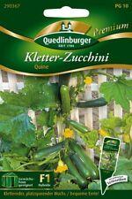 """Quedlinburger  KLETTER-  ZUCCHINI """" Quine  """" rankend Balkon Freiland Samen"""