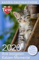 Katzen-Tageskalender 2020 Kalender NEU