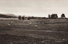 1925 Vintage Print CANADA ~ Landscape Southern New Brunswick Sheep Farm Photo