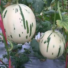 5pcs Korean meteor melon - white vegetables Seeds