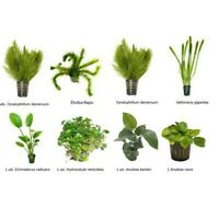 PLANTA DE ACUARIO: LOTE DE 8 PLANTAS TIPO FACIL